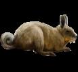 Viscacha ##STADE## - coat 52