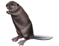 Beaver ##STADE## - coat 26