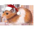 Golden Hamster ##STADE## - coat 117