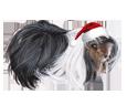 Peruvian Guinea Pig ##STADE## - coat 117